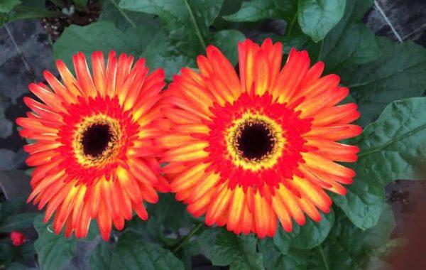 Fleurs des Serres de la Molinette