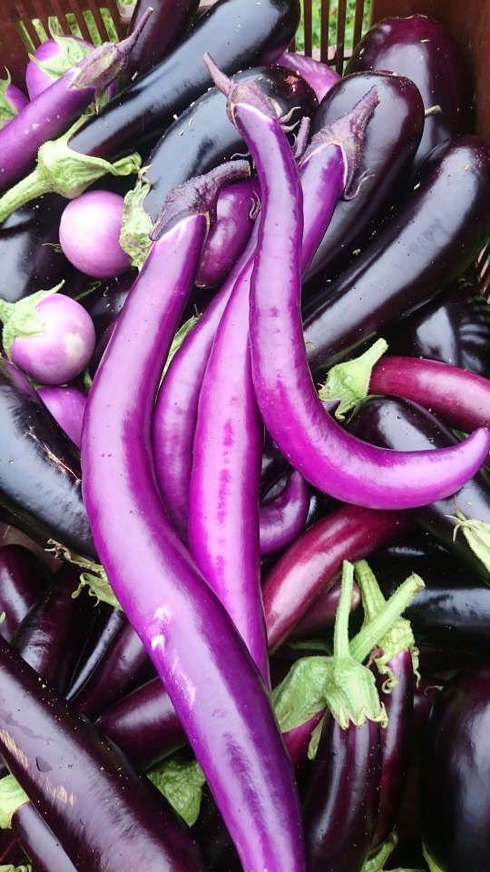 Les légumes bio du Jardin de Zélie