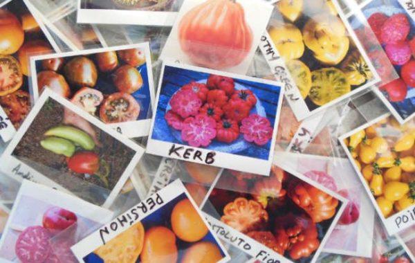 Les légumes du Jardin de Zélie