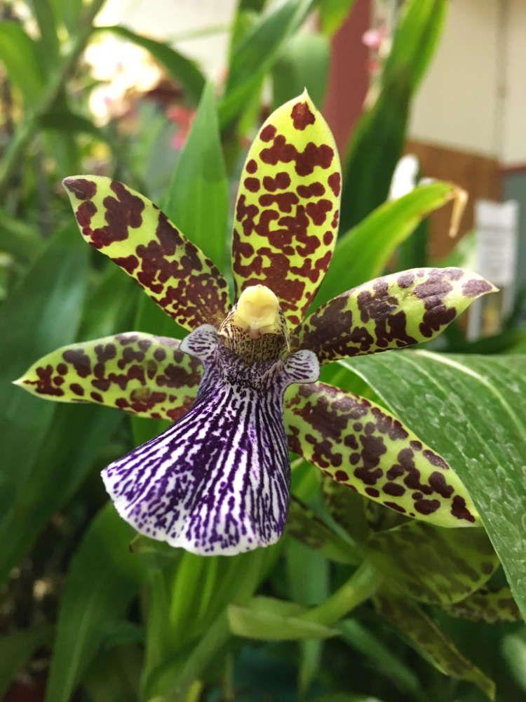 Producteur d'orchidées