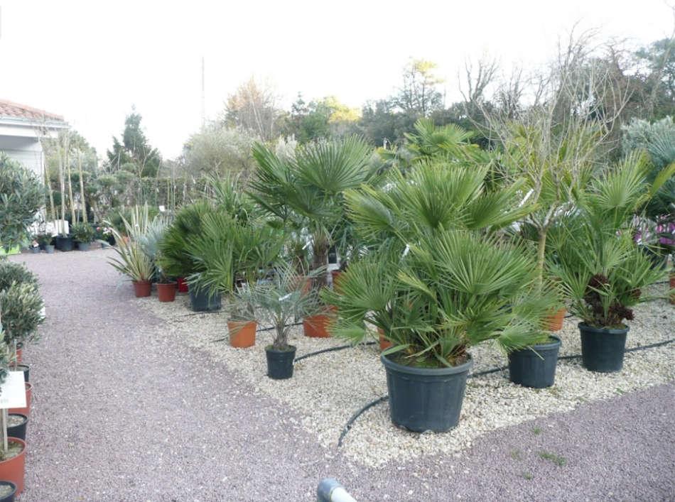 Les palmiers et les plantes méditerranéennes