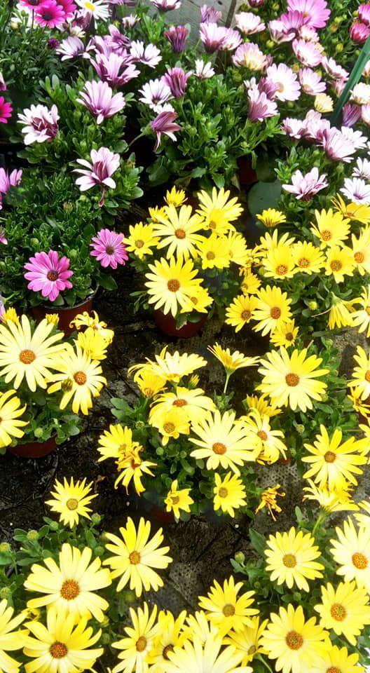 Production de plantes fleuries