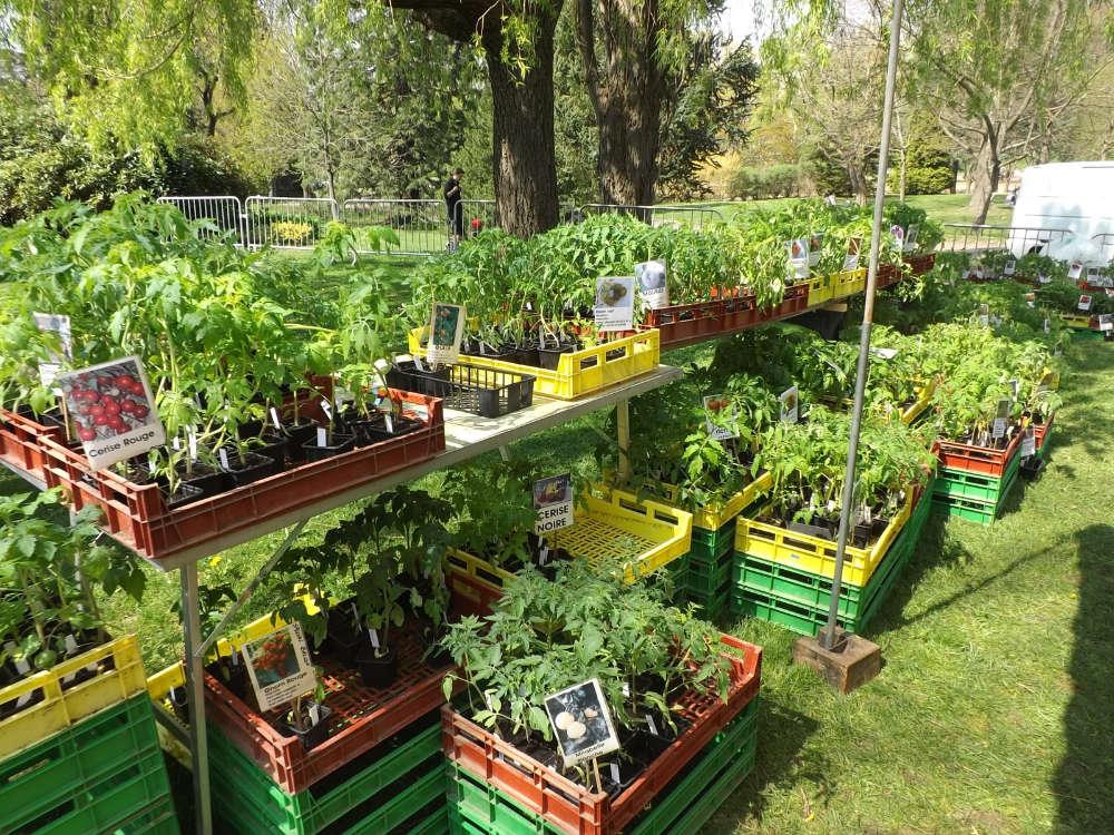 Les plants de légumes des Jardins d'Isana