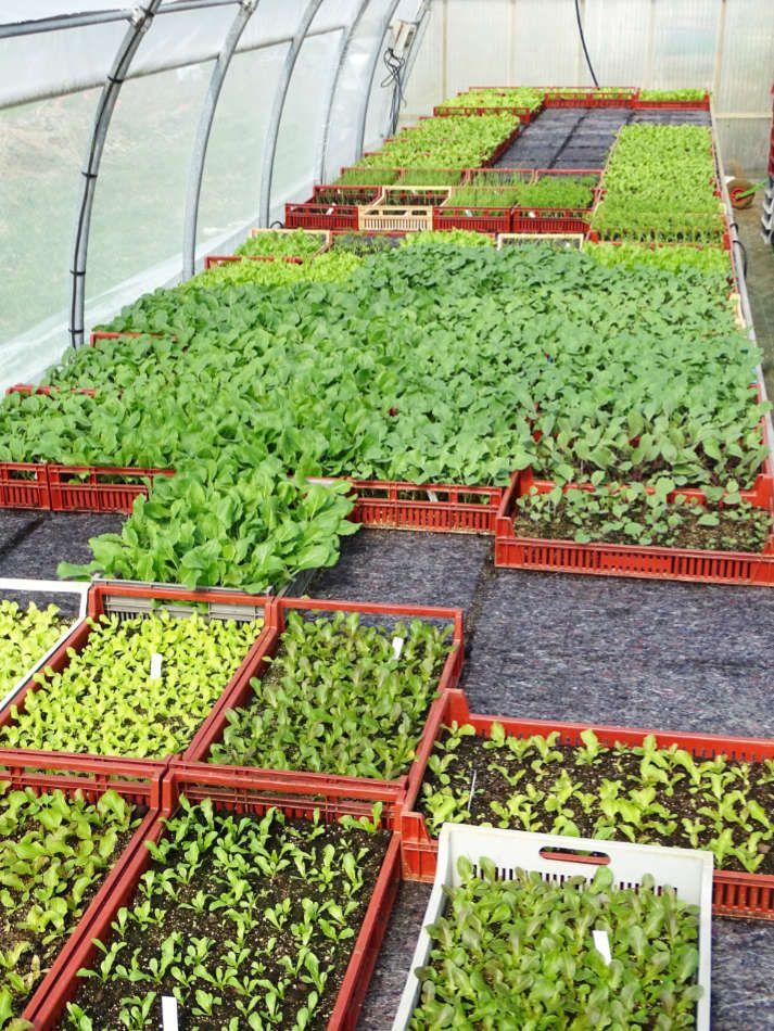 Les plants potagers du Jardin de Zélie