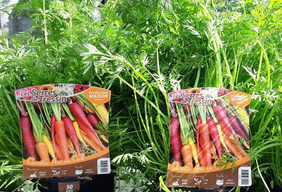 La production des carottes-arc-en-ciel