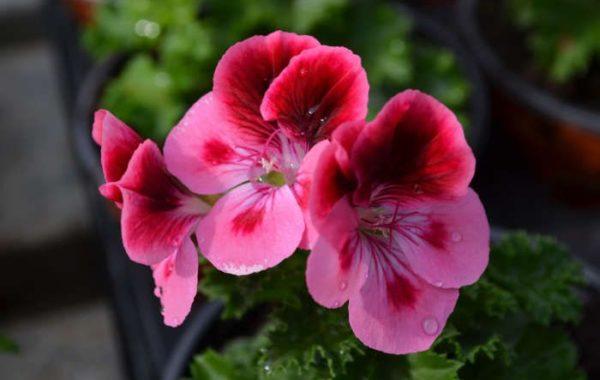Production des Serres Fleuries