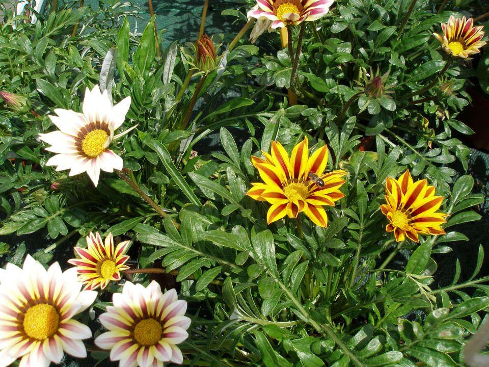 Les plantes produites aux Serres Fleuries