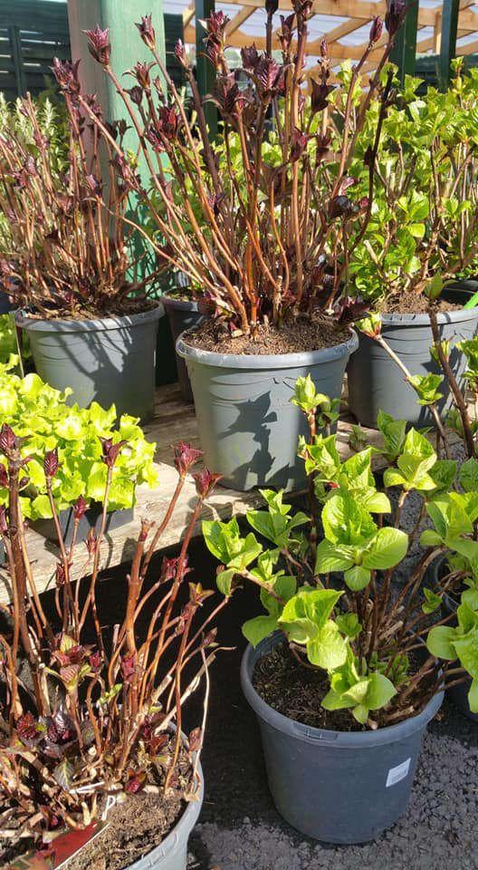 Les végétaux de pépinière