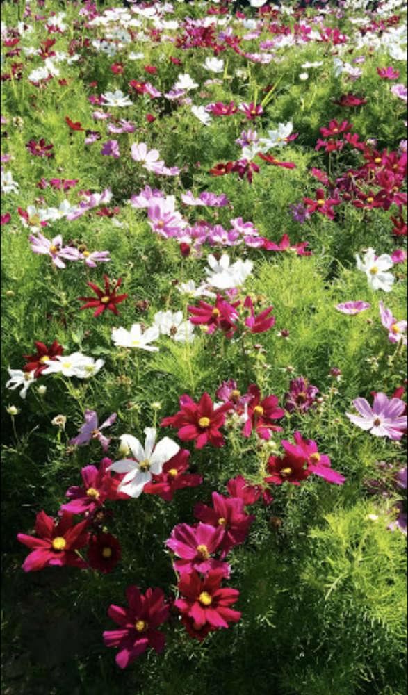 Les plantes des Jardins de la Fée