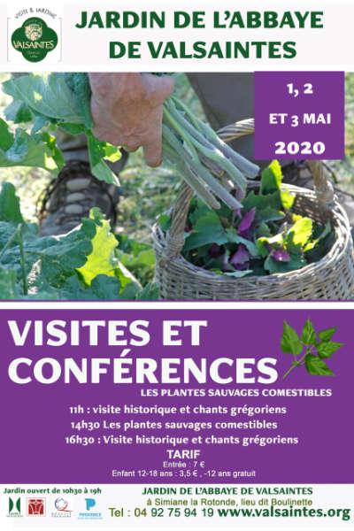 Visites et conférence sur les herbes sauvages comestibles