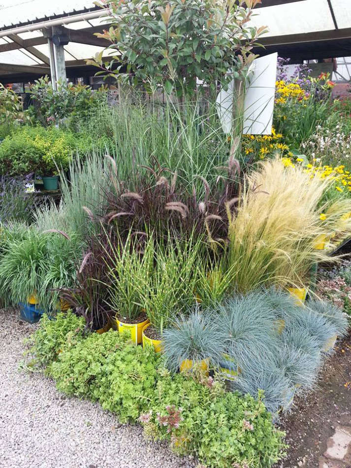 Les végétaux d'extérieur de la Jardinerie Poullain