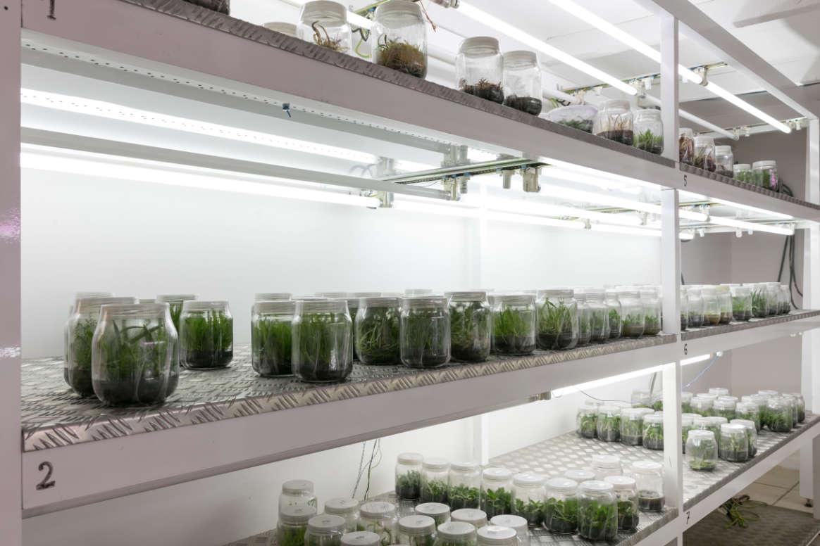 Le laboratoire de culture in vitro