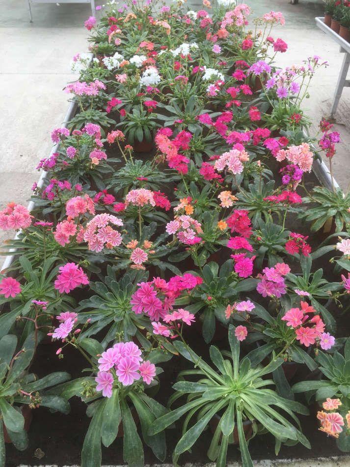 Les plantes fleuries de saison