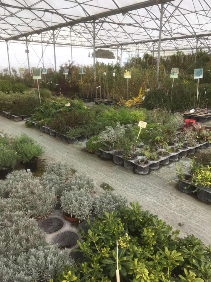 Les végétaux de la Pépinière Melquoirux-de-la-pepiniere-melquior