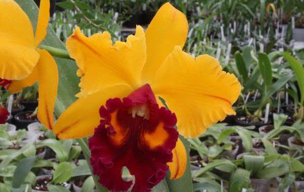 Orchidées de Michel Vacherot