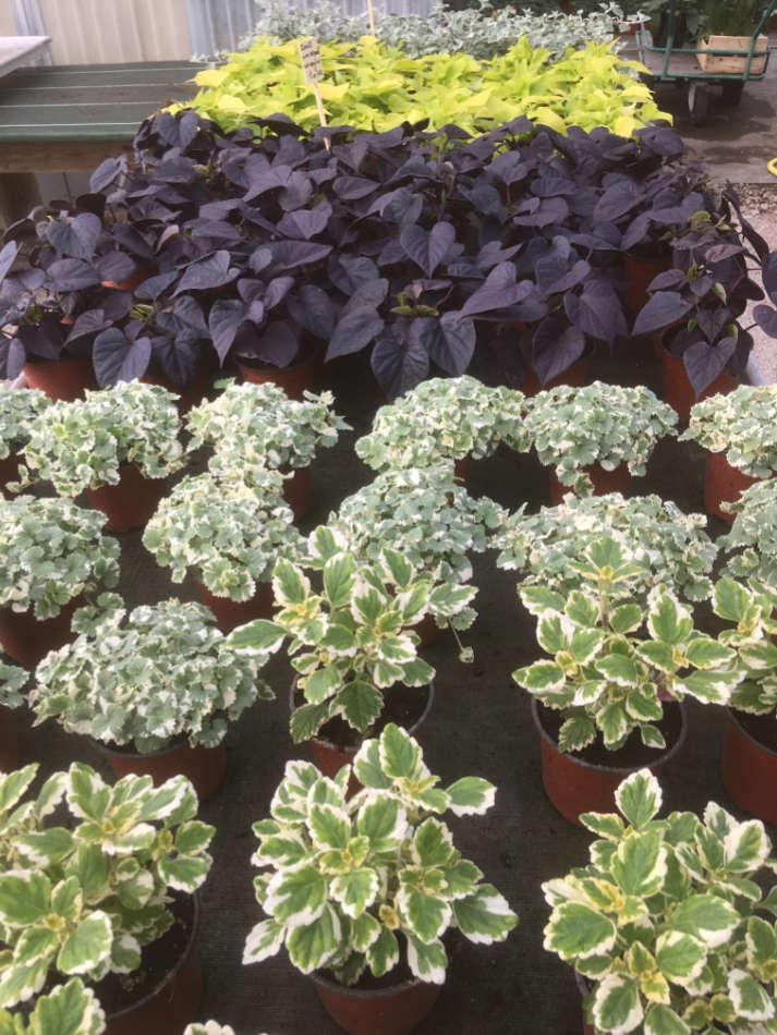 Les végétaux de la Pépinière Melquior