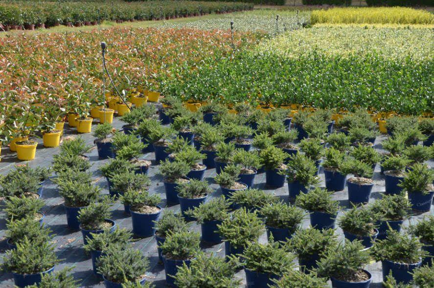 Les végétaux en cours de croissance