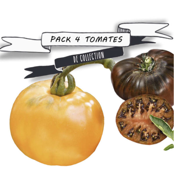 Pack tomates de collection