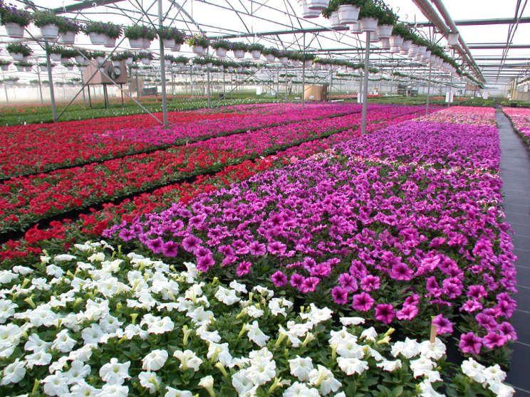 Les serres de production du Temps des Fleurs