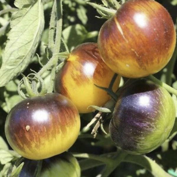 Tomates Stripes Yore