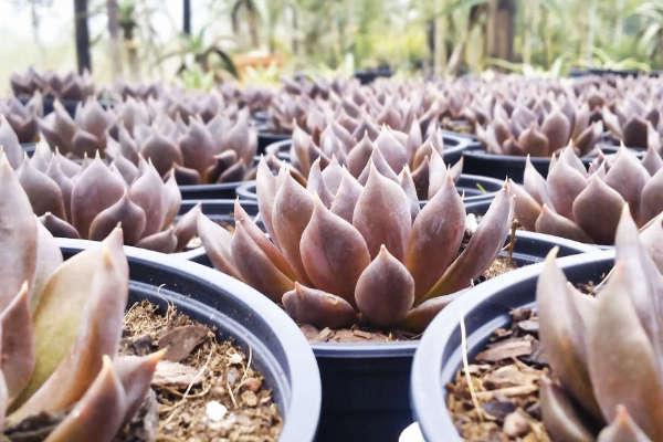 diversite-des-plantes-succulentes