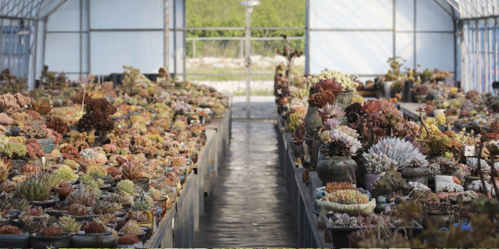 Serre de production de succulentes