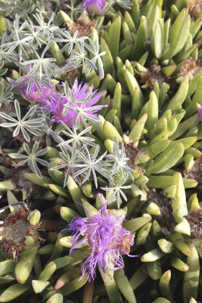 Atelier réaliser une composition de succulentes