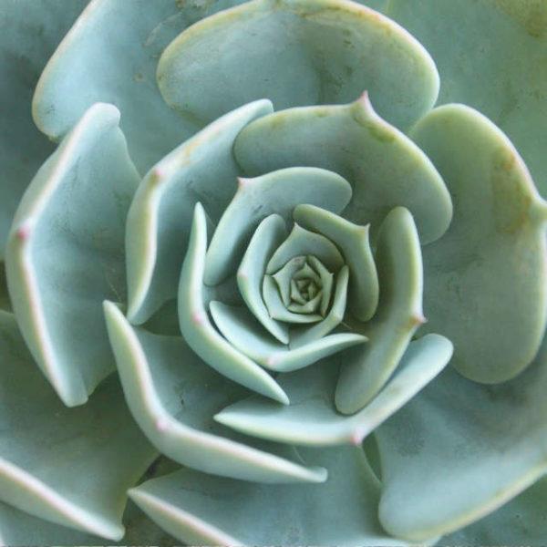 Exemple de plantes du pack de 10 succulentes