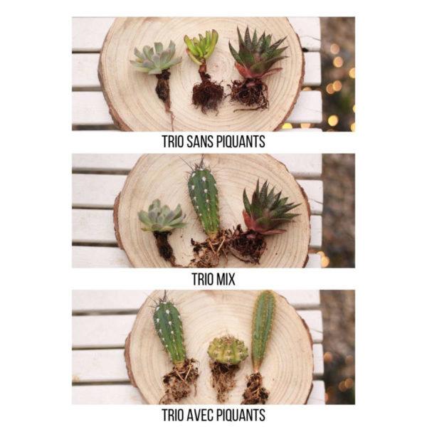 Les 3 options du kit cactées et succulentes