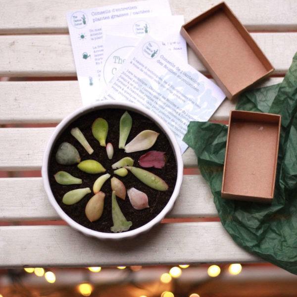 "Kit jardinage ""Feuilles de succulentes"""