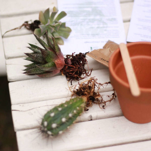 Kit jardinage Créer sa composition de cactées et succulentes