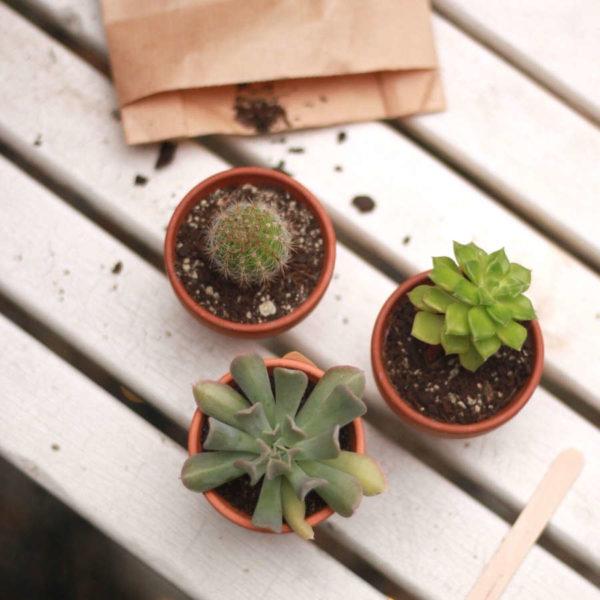 Kit jardinage rempotage de cactées et succulentes