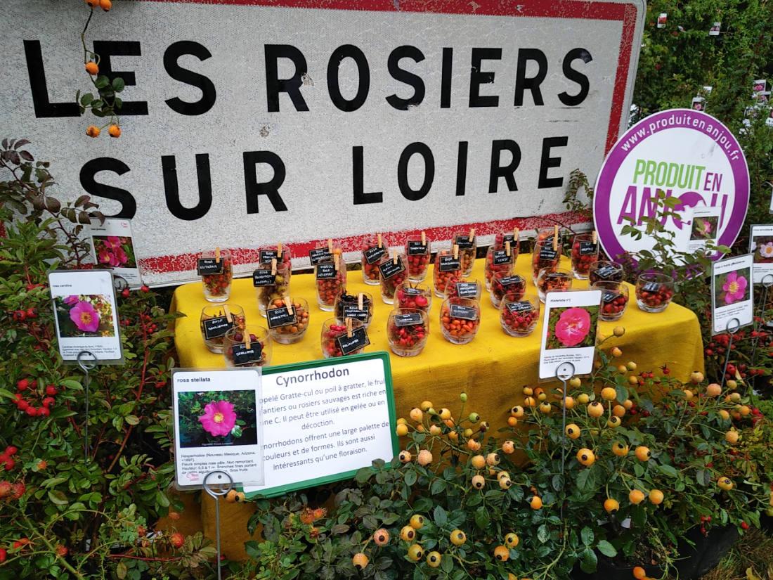 Pépinière Roses Loubert