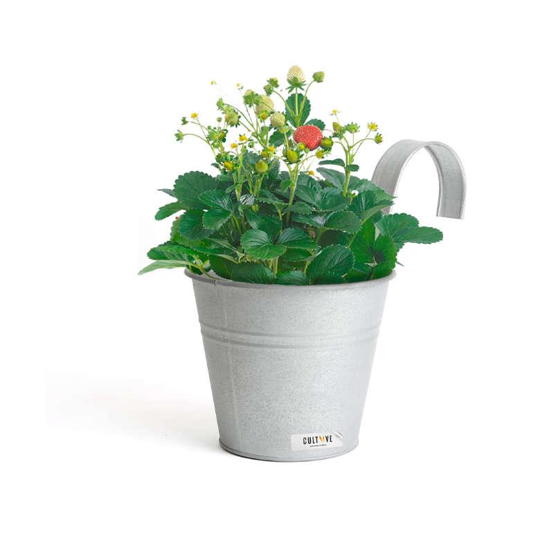 Bac potager en zinc 1 plant