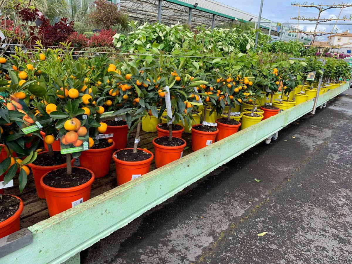 Les fruitiers de la Jardinerie Jaïa