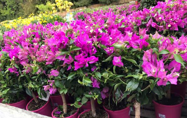 Jaïa Garden