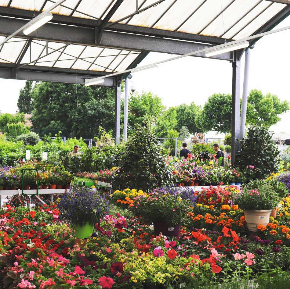 Jardinerie Jaïa Balaruc-le-Vieux
