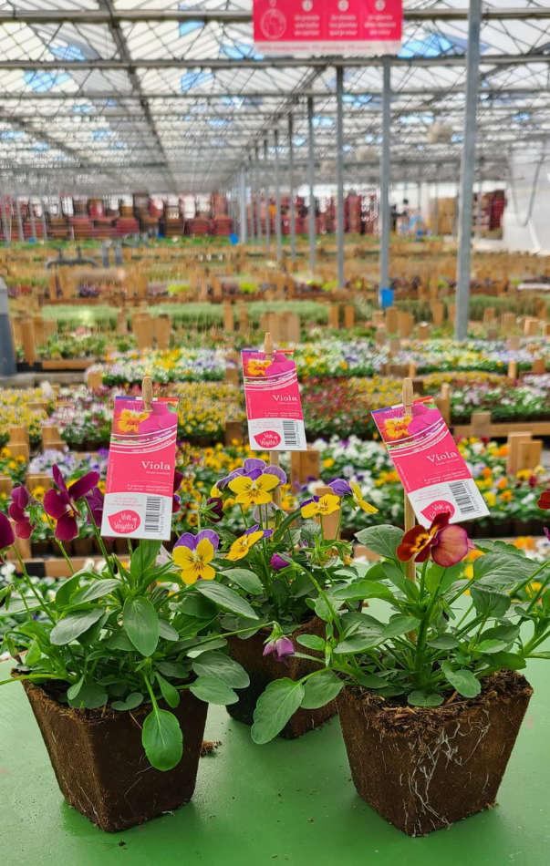 Les fleurs 0 plastique de Vive le Végétal