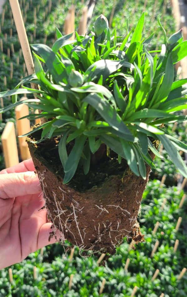 Pot en fibres de bois 100% biodégradable