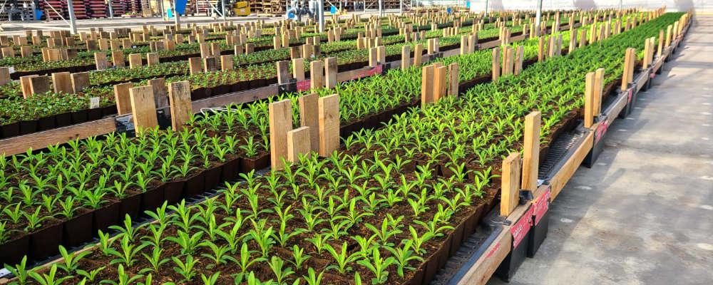 Les productions horticoles de Vive le Végétal
