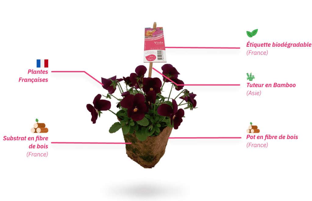 Plante zéro déchet de Vive le Végétal