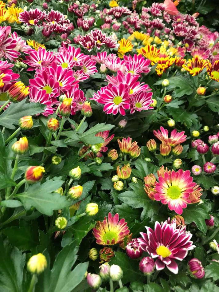 Les plantes fleuries de saison Jaïa Garden