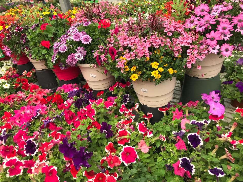 Les plantes de saison de la jardineri Jaïa Béziers