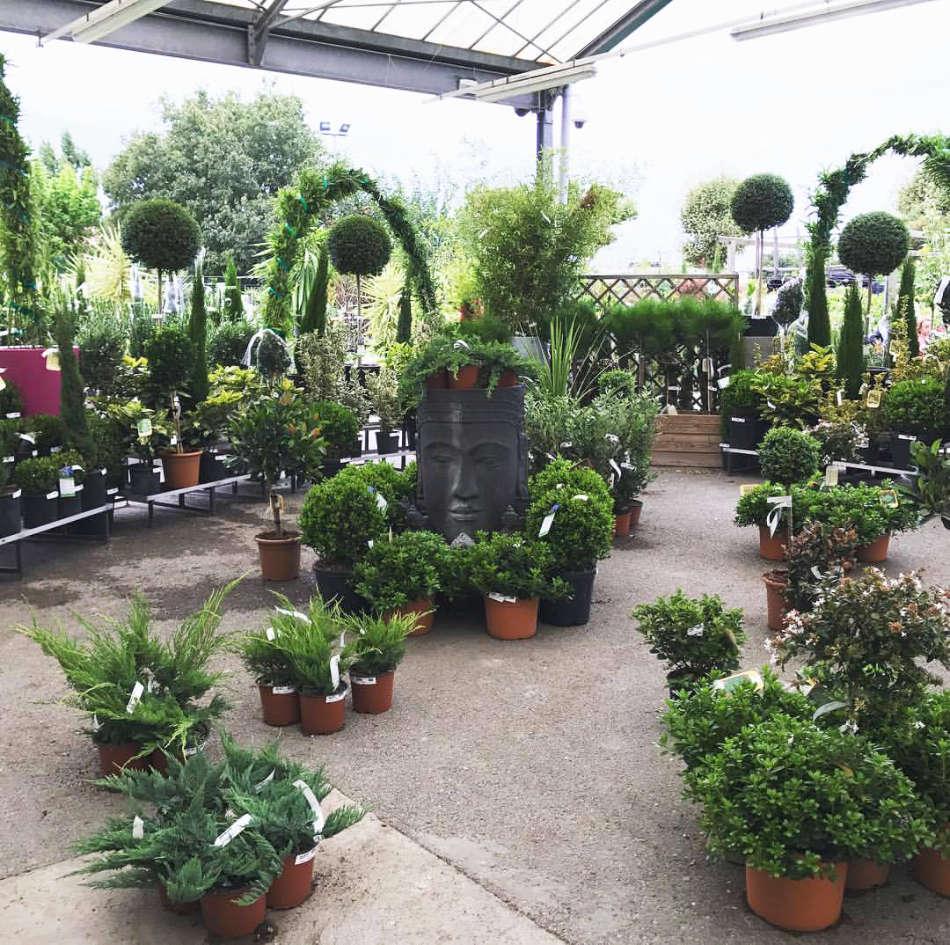 Les plantes vertes de la jardinerie Jaïa Balaruc-le-Vieux