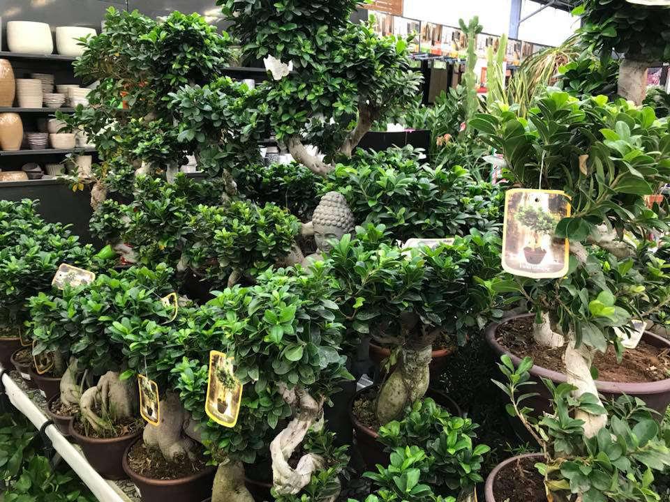 Les plantes vertes de la jardinerie Jaïa Béziers