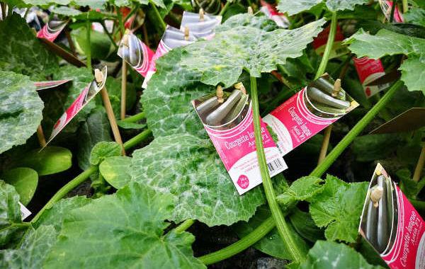 Les plants potagers de Vive le Végétal