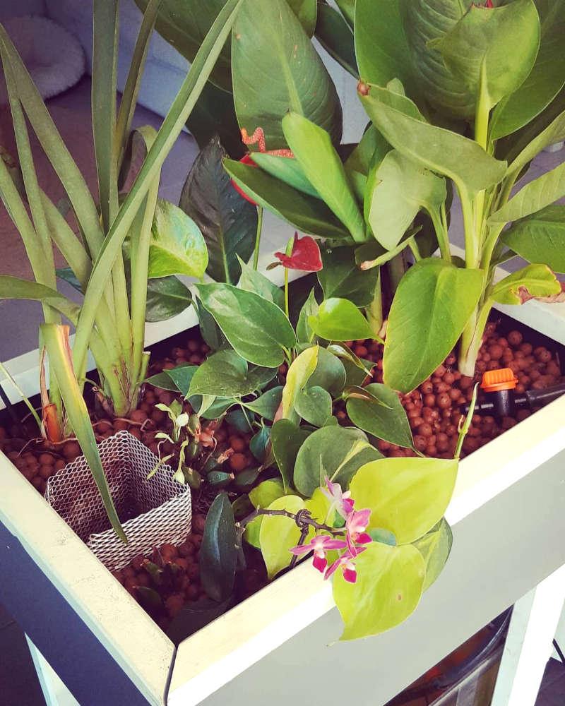 Les plantes de l'Aquapouss'mini