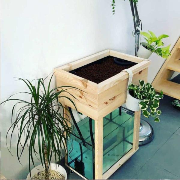 Système aquaponique - Aquapouss'mini