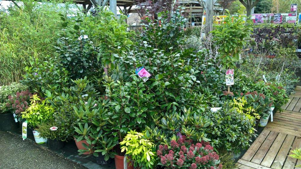 Les végétaux de pépinière de la jardinerie Une saison au jardin