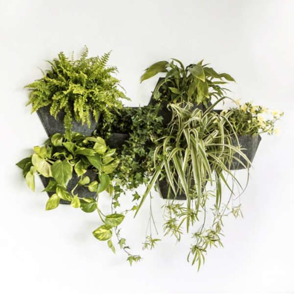 Mur végétal en géotextile